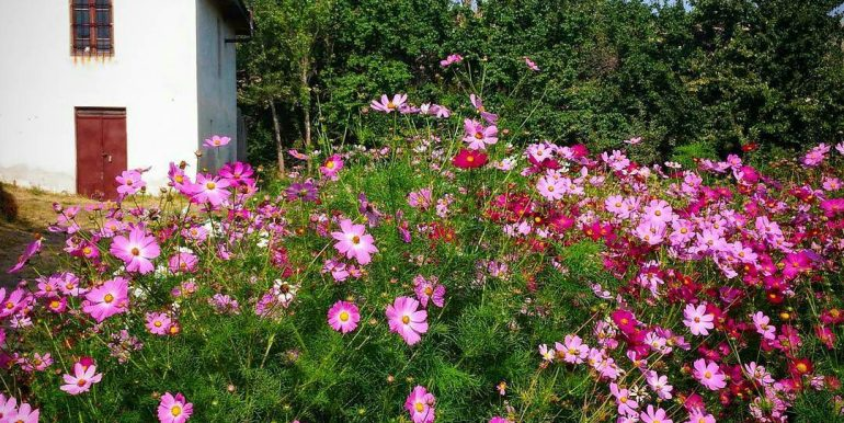 خانه پر گل روستایی