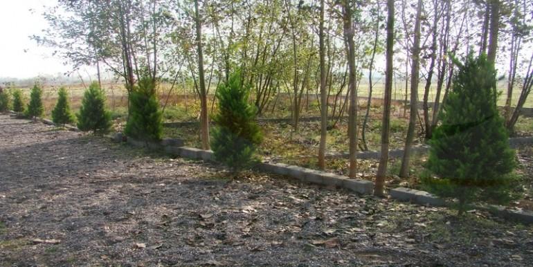 زمین درخت کاری شده زیبا کنار