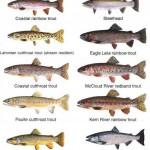 ماهیگیری شمال