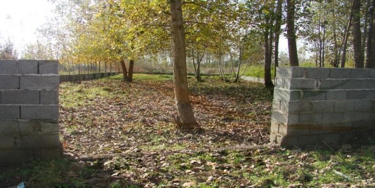 ورودی زمین درخت کاری شده زیبا کنار